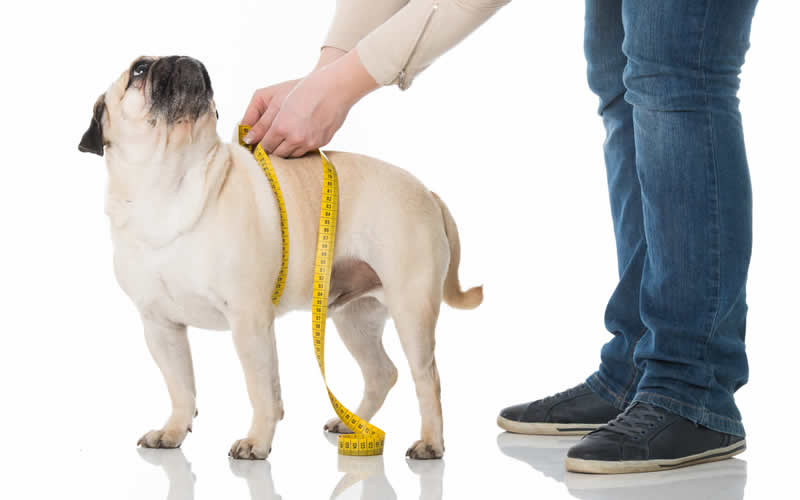 Does your pet need to shed some weight?