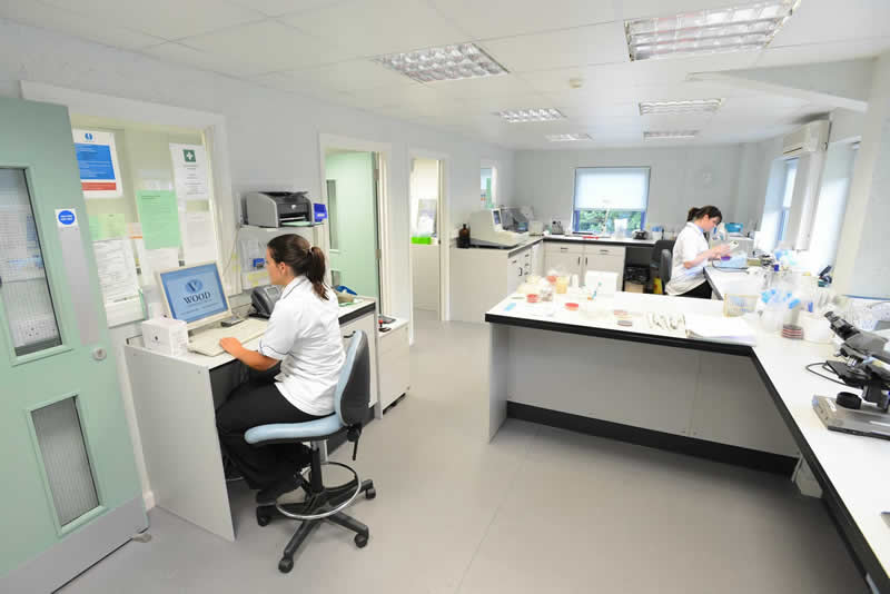 Lab Staff Wood Veterinary Group Quedgeley