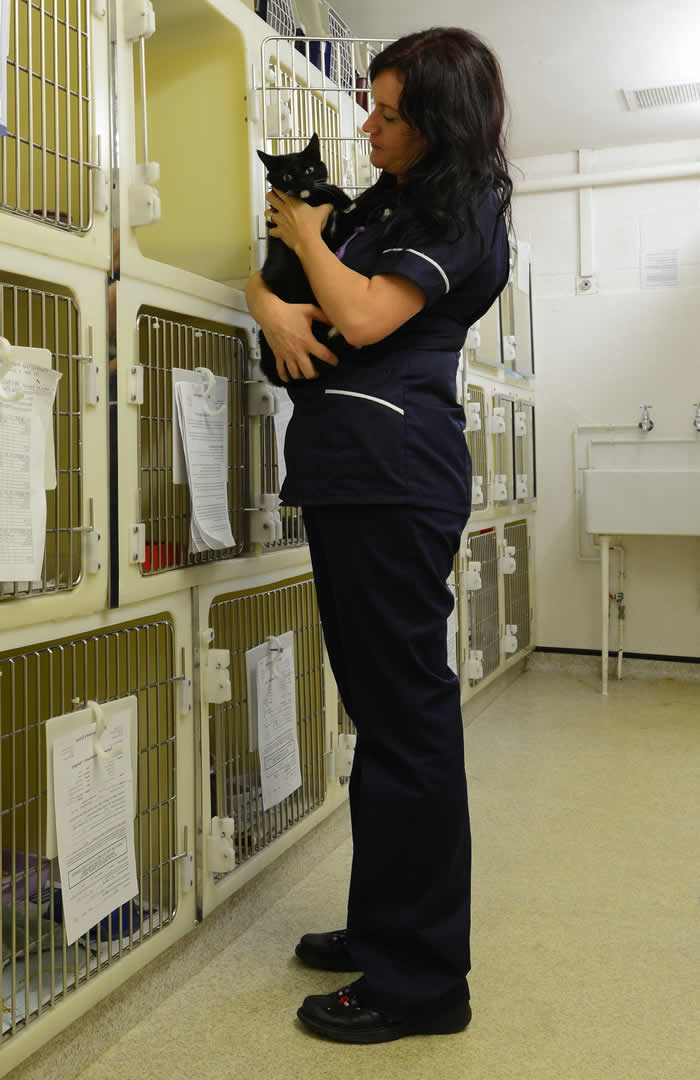 Nurse holding cat at Wood Vets