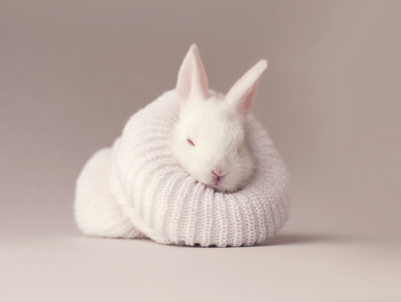 baby rabbit in hat