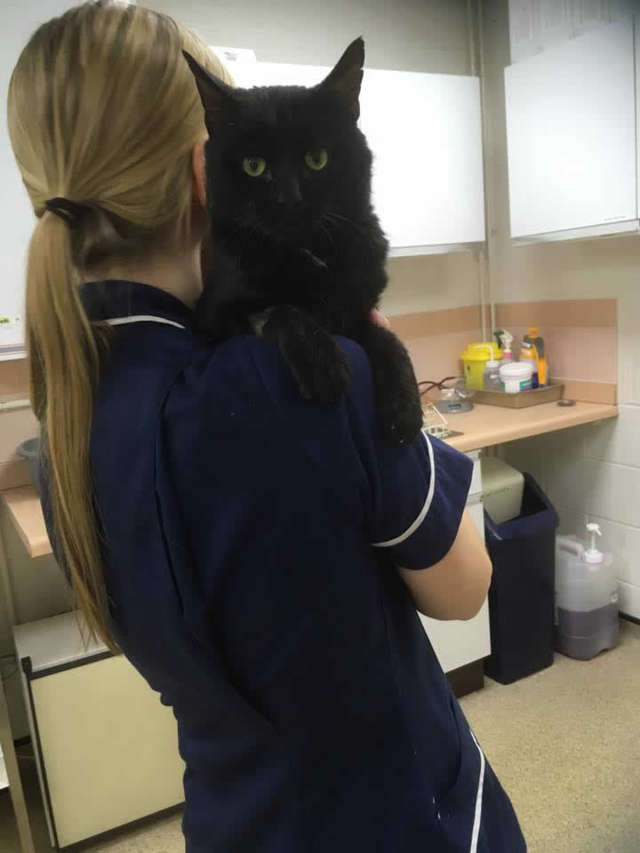 Vet Nurse at Wood Vets with a cat on her shoulder from the hospital