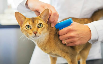 Cat Microchip Offer In February