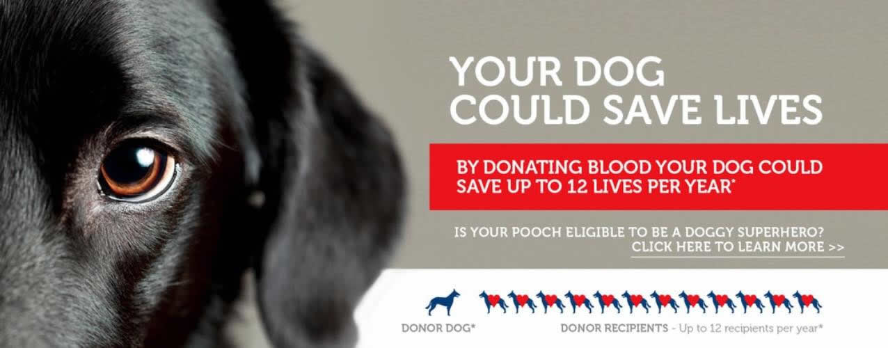 Blood donor dogs Wood Vets