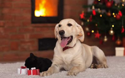 Festive season tips for your pets